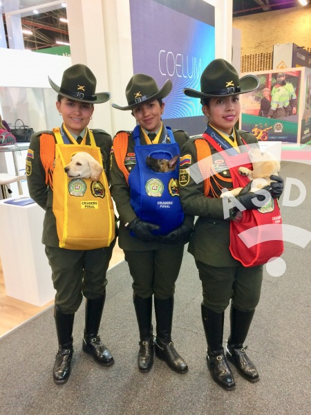 Colombian Mounted Police at ExpoDefensa 2019